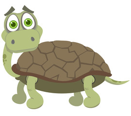 The surprised turtle. A vector illustration