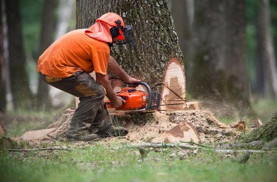 bûcheron coupe arbre abattage forêt préserver déforestation