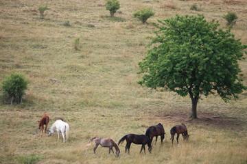 Fotoväggar - pferde
