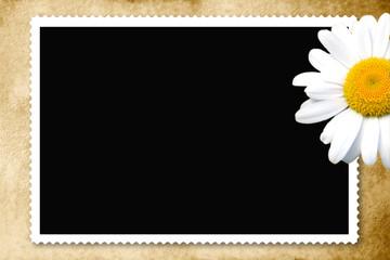 fondo tarjeta foto antigua margarita