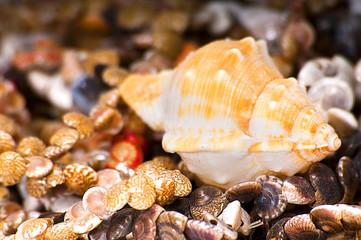 group of beautiful shells