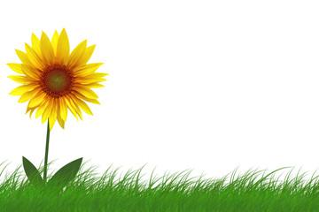 Fototapete - Sonnenblume