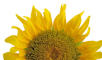 half of sunflower