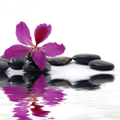 Aluminium Prints Spa : Reflection for black pebbles with beauty red flower