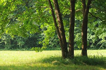 alberi 1031