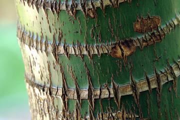 palma alberi 1044