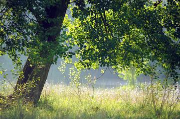 pioppi alberi 1058