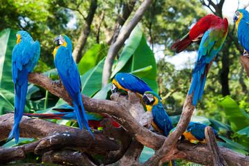 beautiful parrots