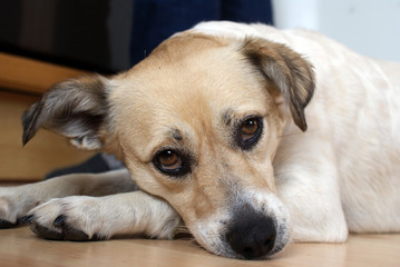 sad dog - trauriger hund