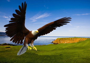 Fototapete - eagle landing in grass
