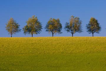 Bäume im Sommer  Allee