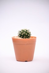 cactus in Thailand