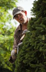 Fototapeta Ogrodnik przy pracy przycinający drzewko obraz