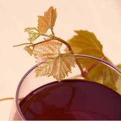 Red Wine in Glass with Grape Leaves