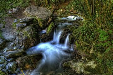 Agua en el bosque.