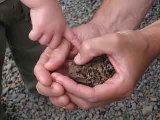 Touching a Toad