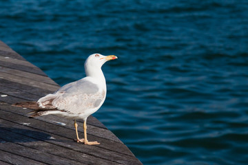 sea gull standing on the edge of wooden bridge