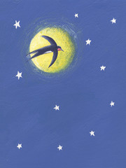 Swallow flying in the night