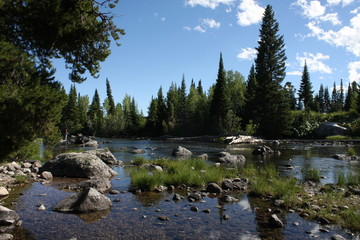 Rocky River view of Pine Trees