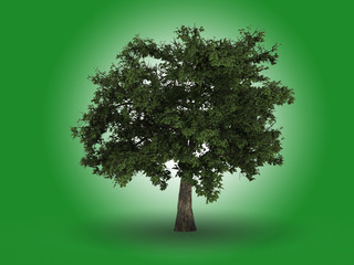 Isolated green tree with square leaves