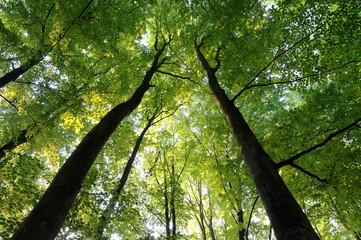 green high trees