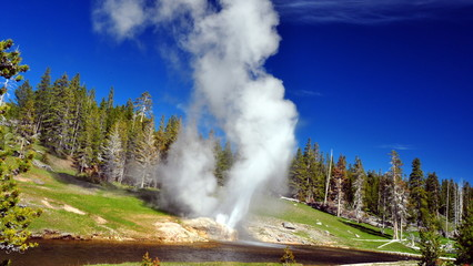 Riverside geyser. Yellowstone National Park