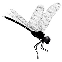 Vector dragonfly represented in the form of a tattoo