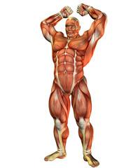Wall Mural - Athlet mit Muskel Kraft Pose