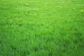 Schöne grüne Wiese