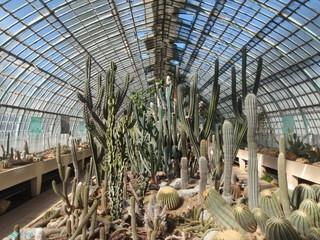 Paris-Serres-d'Auteuil-Cactus