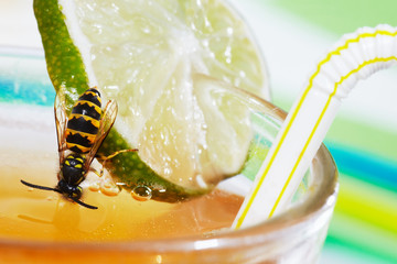 yellow jacket at drinking glass with apple spritzer  02