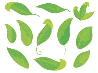 Different angle and direction of leaves