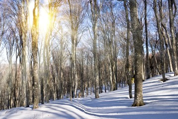 winter beach forest by a sparkle day