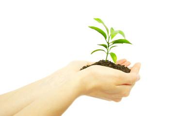 plant between hands