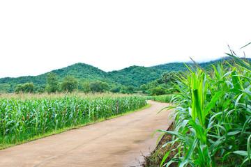 Road to corn field