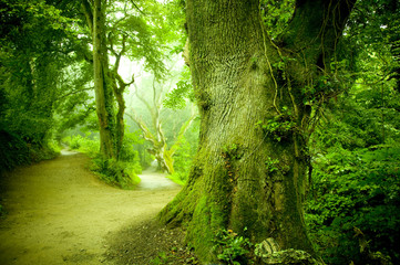 Wall Murals Road in forest Forest Pathway