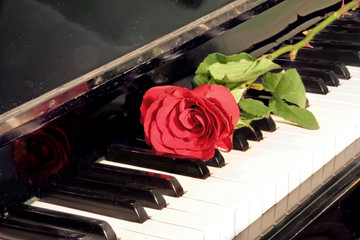 rose over piano key