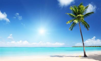 palm and sea