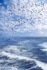 Covey of birds on a background sky and sea