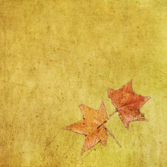 Autumn colorful maple leaf on grungy background