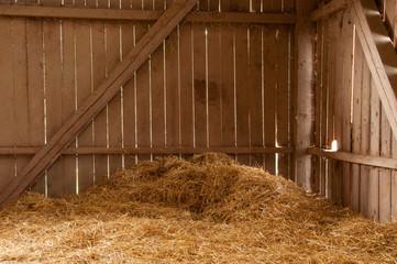 Fototapeta A day in the barn obraz
