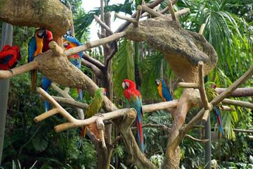 Parrots in rainforest.
