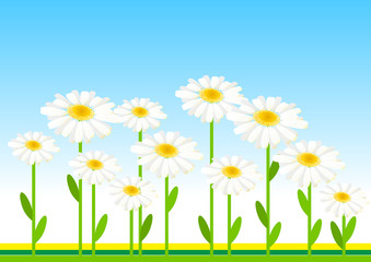 Stylized meadow with daisies