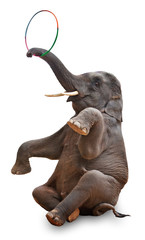 akrobatischer Elefant freigestellt