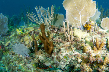 Coral Ledge Compostion, picture taken in south Florida