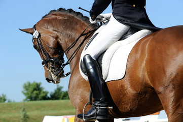 Foto op Plexiglas Paardrijden Dressurreiten