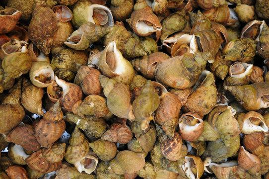 bulots cuits au marché de Trouville