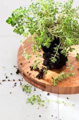 Kitchen Herb