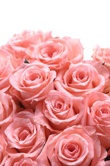 bunch of multiple pink roses
