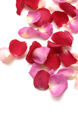 Rose Petals with copy space